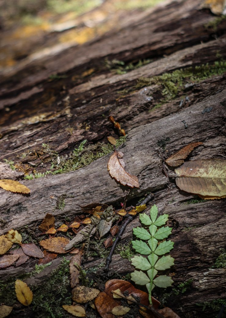 Different leaves on a woodsy surface, probably a fallen tree.