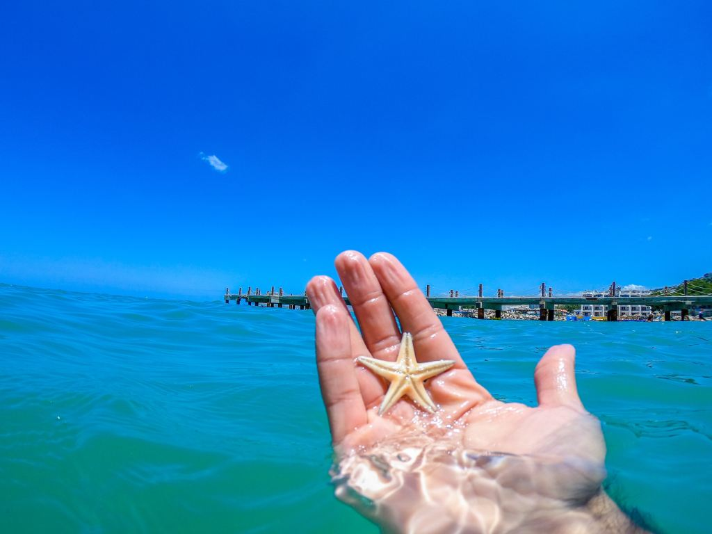 hand holding small starfish partially submerged in water, pier in background